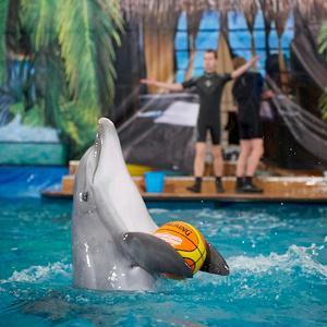 Дельфинарии, океанариумы Жигулевска