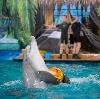 Дельфинарии, океанариумы в Жигулевске